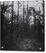 Horror In The Woods Acrylic Print