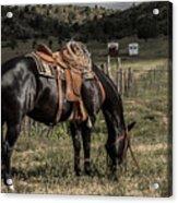 Horse 3 Acrylic Print