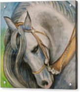 Horse. Acrylic Print