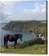 Horse Along Coastal Path Cornwall Acrylic Print