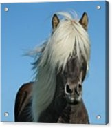 Horse And Blue Sky Acrylic Print