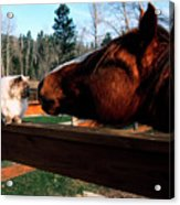 Horse And Cat Nuzzle Acrylic Print