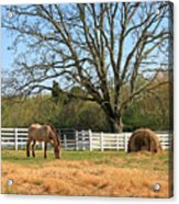 Horse And Hay Acrylic Print