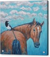 Horse And Magpie Acrylic Print
