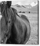 Horse And Sawtooth Mountains Acrylic Print