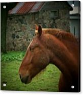 Horse And Shed Acrylic Print