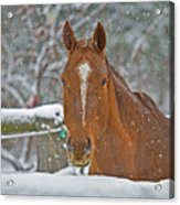 Horse And Snowflakes Acrylic Print