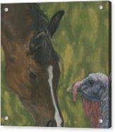Horse And Turkey Acrylic Print