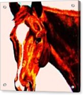 Horse Art Horse Portrait Maduro Red With Yellow Highlights Acrylic Print