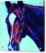 Horse Art Horse Portrait Maduro Striking Purple Acrylic Print