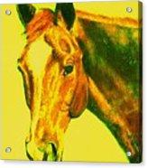 Horse Art Horse Portrait Maduro Yellow Acrylic Print