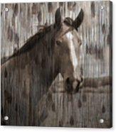 Horse At Home On The Range Acrylic Print