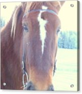 Horses Use Complex Facial Expressions Nearly Identical To Humans  Acrylic Print by Hilde Widerberg