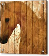 Horse Barn Door Rustic Acrylic Print