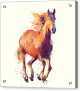 Horse // Boundless Acrylic Print
