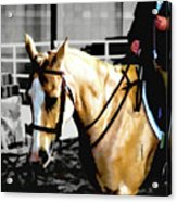 Horse Equus Ferus Caballus V2 Acrylic Print