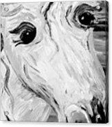 Horse Eyes Acrylic Print