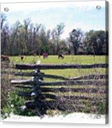 Horse Farm Acrylic Print
