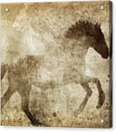 Horse Grunge Acrylic Print