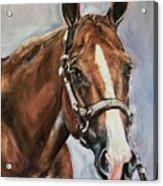Horse Head Portrait Acrylic Print