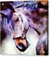 Horse I Will Follow You Acrylic Print
