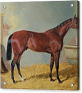 Horse In A Stable Acrylic Print by John Frederick Herring Snr