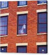 Horse In An Upstairs Window Acrylic Print