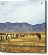 Horse In Eastern Sierras Acrylic Print