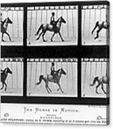 Horse In Motion, 1878 Acrylic Print
