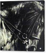 Horse In The Dark II Acrylic Print