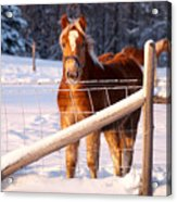 Horse In The Snow Acrylic Print