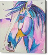 Horse In Pink  Acrylic Print