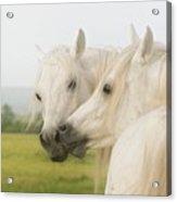 Horse Kiss Acrylic Print by ELA-EquusArt