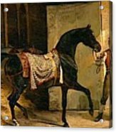 Horse Leaving A Stable Acrylic Print