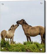 Horse Love Acrylic Print