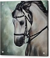 Horse N.1 Acrylic Print