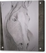 Horse On Paper  Acrylic Print