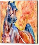 Horse On The Orange Background Acrylic Print