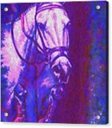Horse Painting Jumper No Faults Purple And Blue Acrylic Print