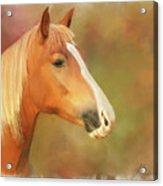 Horse Painting Acrylic Print