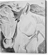 Horse Pair Acrylic Print