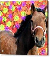 Horse Play Acrylic Print