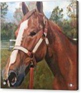 Red Dun Horse - Reds Done Dancin By Marilyn Nolan-johnson Acrylic Print