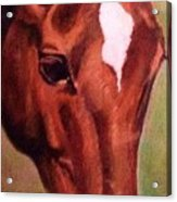 Horse Portrait Horse Head Red Close Up Acrylic Print