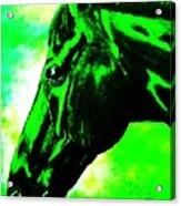 horse portrait PRINCETON green and black Acrylic Print