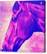 horse portrait PRINCETON pink Acrylic Print