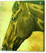 horse portrait PRINCETON soft colors Acrylic Print