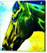 horse portrait PRINCETON vibrant yellow and blue Acrylic Print