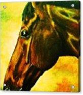 horse portrait PRINCETON yellow Acrylic Print