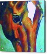 horse portrait RED psychedelic Acrylic Print